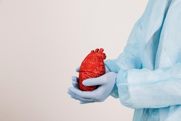Seseorang memegang organ jantung sebagai simbol prosedur ablasi jantung