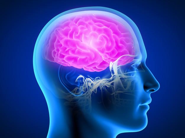 Radang Otak - Ilustrasi otak manusia