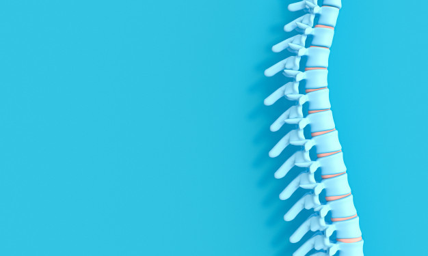 Ilustrasi tulang untuk menggambarkan transplantasi sumsum tulang